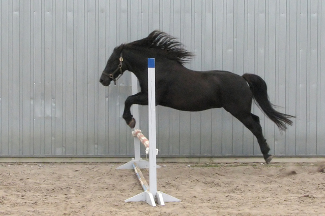flying-horses-3-1185527-639x426