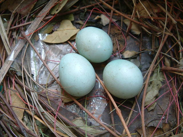 bird-nest-1183852-640x480