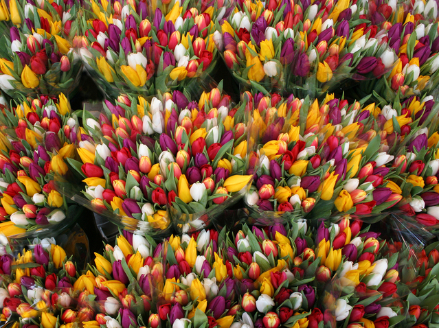 tulips-for-sale-1168927-639x477